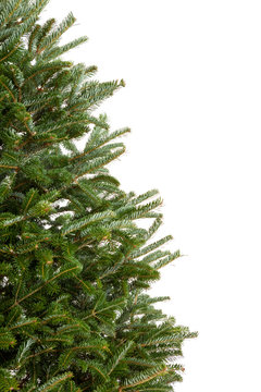 Branches of a Christmas tree isolated on white