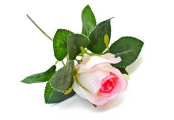 Yellow cloth rose