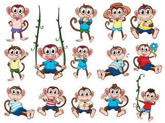 A group of monkeys