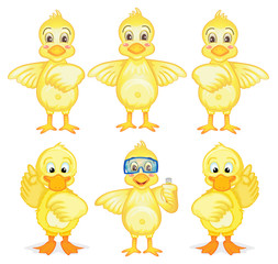 Six ducklings