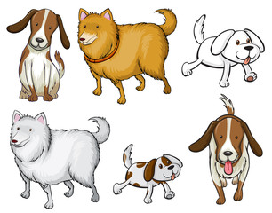 Different specie of dogs