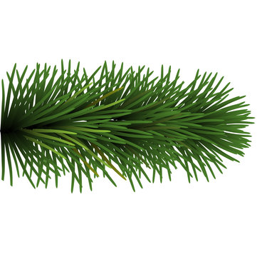 ветвь рождественская ель