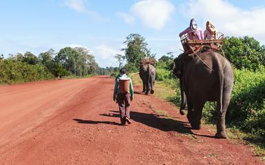 promenade à dos d'éléphants