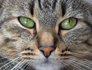 Cat's muzzle close up