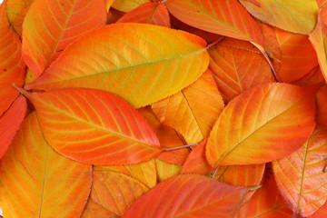 Autumn yellow and red leaves background