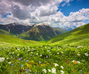 In de dag Lavendel Fields of flowers in the mountains. Georgia, Svaneti.
