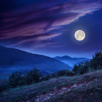 forest on a steep mountain slope at night in full moon light