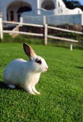 Rabbit in a green grass
