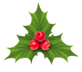 Holly berry Christmas decoration isolated on the white
