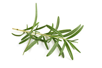 twig of rosemary isolated on white