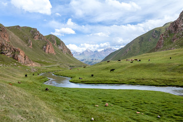 Fototapete - Mountains, river and farm animals, Tien Shan