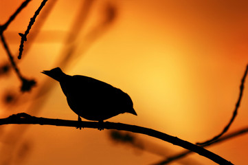 Bird Silhouette on a Branch