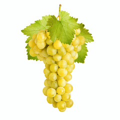 Fresh bunch of grapes of white wine