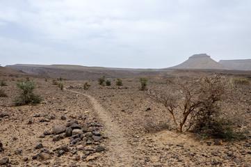 Morocco, Hamada du Draa, path