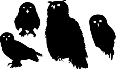 Silhouettes of owls