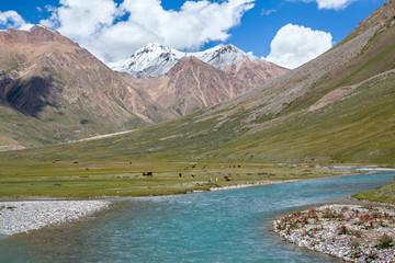 Fototapete - Majestic turquoise river in Tien Shan mountains
