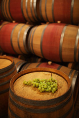Barrels in the cellar with bunch of grape