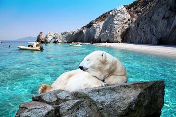 Acrylic Prints Polar bear Ice bear on a beautiful beach