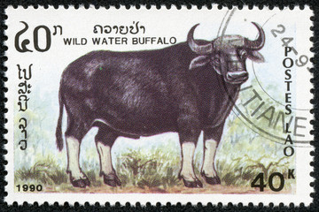 stamp printed by Laos, shows wild water buffalo