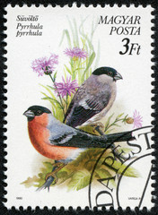 stamp printed in Hungary, shows the Eurasian bullfinch