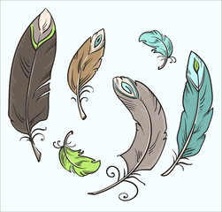 Isolated feathers. Cartoon drawing. Vector illustration.