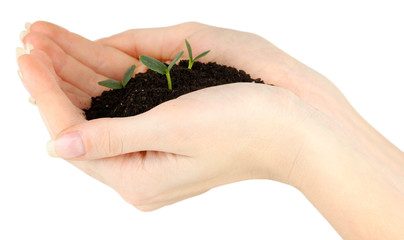 Green seedling growing from soil.in hands