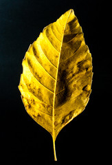 Obraz liść - fototapety do salonu