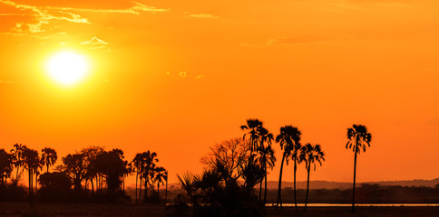 Orange glow sunset in a palm trees landscape