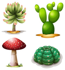 A mushroom and cacti