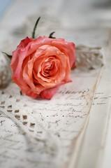 Wall Mural - Vintage rose