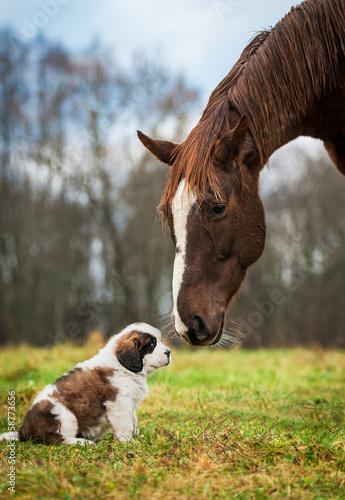 Wall mural Horse and saint bernard puppy