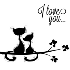 cats in loves