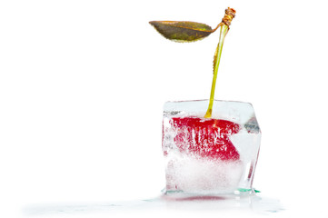 ice cube with frozen cherries