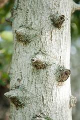 Closed up torn on bark tree