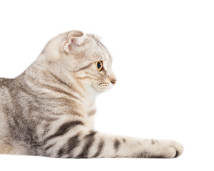 side view of smiling cat