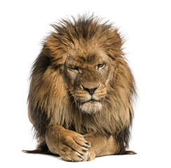 Foto auf Leinwand Löwe Front view of a Lion lying, crossing paws, Panthera Leo