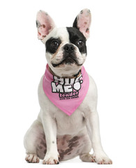 French Bulldog puppy wearing a pink bandana sitting
