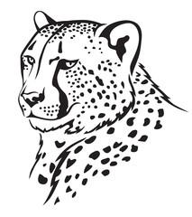Cheetah muzzle