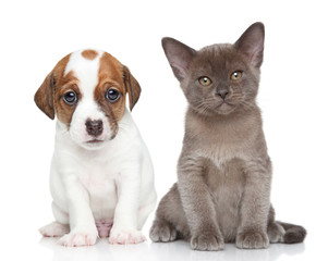 Wall Mural - Puppy and kitten on white