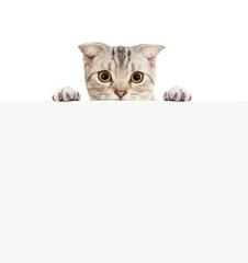 Pretty cat with empty board