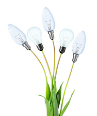 Light bulbs on plant isolated on white