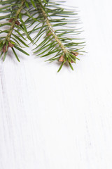 fir branches on a white wooden background