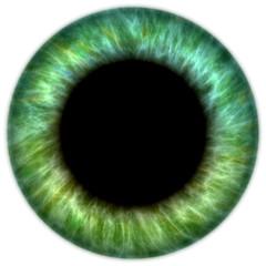 Fond de hotte en verre imprimé Iris green iris