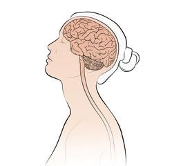 Gehirn, Rückenmark bei einer Frau