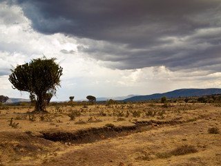 African savanna front of rain