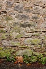 Wall Mural - Natursteinwand mit Pionierpflanzen