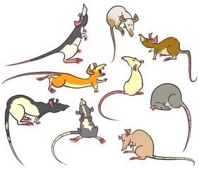 rats set