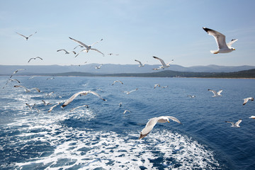 Seagulls against sea and sky Wall mural