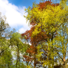 Spring tree crowns.