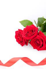 frische rote rosen mit einem roten band isoliert